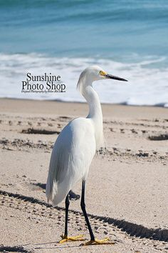 Snowy Egret on the Beach by SunshinePhotoShop on Etsy