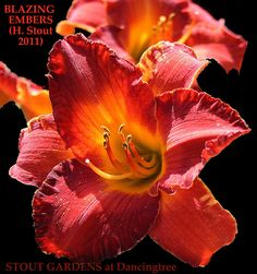 82 Best Lilies   other beauties images in 2019  61def8bba