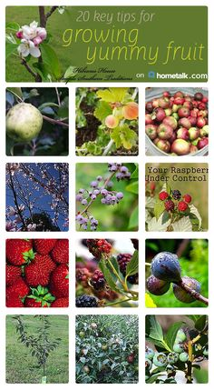 Here are some great tips for growing your own fruit!