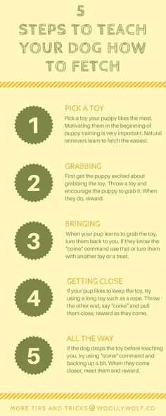 5 Steps to Teach Your puppy how to fetch. Play with dog, fun puppy ideas. Dog training ideas. #MasterDogTrainingandSocializing