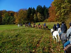 http://owwanderer.eu/countryside-horse-riding-2/holiday-in-the-sadle/