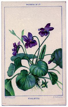 Floral Graphic - French Violets - The Graphics Fairy