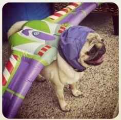 Pug Lightyear… Milos next costume!! (Via Chas)     lol! Luv it
