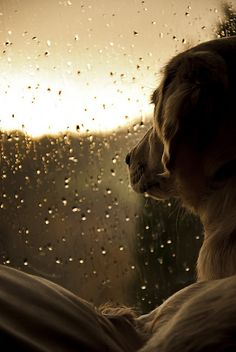 We're not going out in that ....... by Sophie & Me, via Flickr
