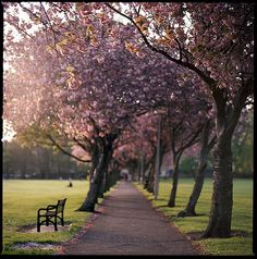 Can't WAIT for this to happen! The Meadows, Edinburgh, United Kingdom.