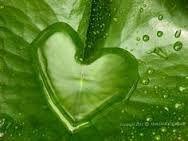 shape of heart in natural leaf