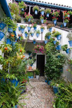 México viene de España / Colores / Jardín vertical / Patio - Cordoba, Andalucia, Spain
