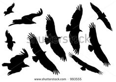 stock-photo-vulture-silhouettes-993555.jpg (450×319)