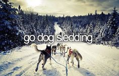 12 Activities Besides Skiing to do in Canada this Winter Dog Sledding in Alaska! We can book your cruise and/or land tour to Alaska! We are Alaska specialists! Adventure Activities, Adventure Is Out There, The Great Outdoors, Places To See, Scenery, Cool Stuff, Pictures, Sled Dogs, Siberian Huskies