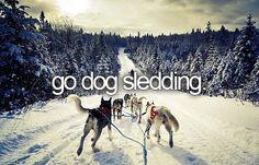 Go Dog Sledding