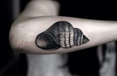 SeaShell Tattoo on Forearm
