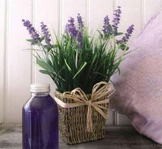Reasons to Love Lavender Decorate with lavender.Decorate with lavender. Lavender Cottage, Lavender Garden, Lavender Blue, Lavender Fields, Lavender Decor, French Lavender, Lavender Scent, Lavender Flowers, Ikebana