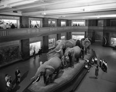 From the archives: Visitors tour the Akeley Hall of African Mammals, 1962.     © AMNH Library/Image #328663