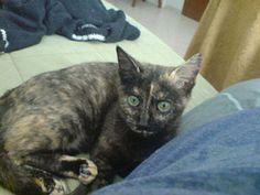 Lucemia en gatos