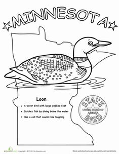 first grade animals life science worksheets minnesota state bird
