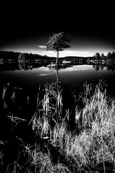 The lonly tree II (Infrared) - A second shot of the tree in the lake.