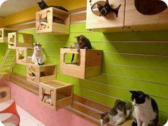 Casas acondicionadas para vivir con gatos