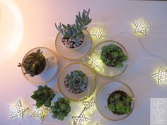 Cup // S/M Reuse, Terrarium, Tea Pots, Recycling, Mugs, Plants, How To Make, Inspiration, Glasses