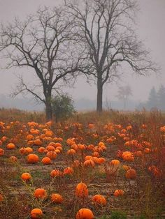 No source was given but it is a great spooky Halloween photo. I would love to paint it