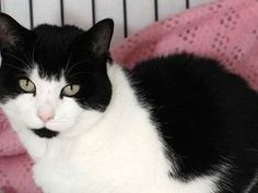 Pet cat dying in garden after road accident is saved by family's dog   UK   News   Daily Express