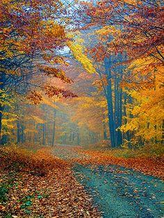 Upstate Ny autumn-insperation