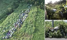 A new photo project offers unprecedented insight into the desolate exclusion zone surrounding Fukushima, Japan - where overgrown forest is engulfing hundreds of vehicles and homes.