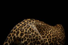 Photographer Vincent J. Musi capture the beauty of the wild big cat portraits, wild animals have appeared more graceful and fierce with a black background. Minimalist Street Style, Life Design, Grid Design, Big Cats, Jaguar, Cool Stuff, Fashion Fashion, Fashion Women, Fashion Shoes