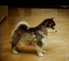 27 Best PUPPY! images in 2019   Pets, Cute dogs, Cute puppies