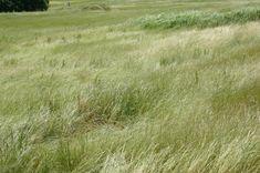 草が風になびく音は聞いていて落ち着きます