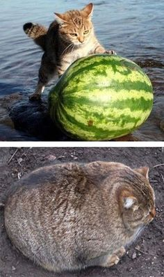 Говорила мама: хорошо жуй, когда ешь... I can't eat just one slice of watermelon either ~