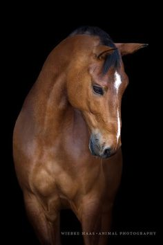 Pferd, Pferde, Warmblut, Pferdefotografie You are in the right place about art photography subjects Pretty Horses, Horse Love, Beautiful Horses, Animals Beautiful, Horse Photos, Horse Pictures, Animal Pictures, Equine Photography, Wildlife Photography