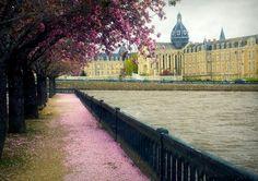 cherry blossoms at chateau gontier (pays de la loire)