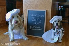 GBGV Baking for Puppies