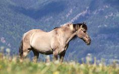free screensaver wallpapers for horse, Oakley Bush 2017-03-12