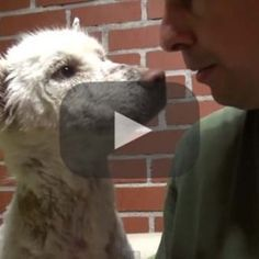 Homeless dog living in a trash pile gets rescued, and then does something amazing! >>> The most touching moments come when this poor dog meets another rescued dog.