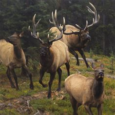 Kyle Sims Art: Lessons of the Rut: oil, 45 x 45 in.