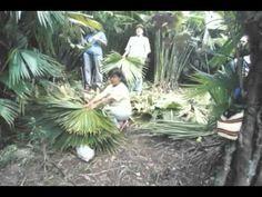 "DEPARTAMENTO DE NARIÑO, COLOMBIA   S, 23 FEB 2013 - ""Ancuya, Nariño, Colombia"". Parte 1. (IPITIMES.COM® /FUENTE: ANDRES CASANOVA)."