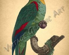 Bird Parrot West African Love-bird Red Shining Parakeet Clip | Etsy African Love, Vintage Birds, Parakeet, Image Shows, Love Birds, Printable Wall Art, Background Images, Parrot, Card Making
