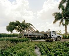 The Big Thorny Business of Palm Trees and Cacti #ITBusinessConsultants