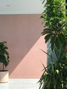 Perfect Blush Pink Wall Colour