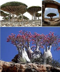The Socotra Archipelago, part of the Republic of Yemen, has been described as one of the most alien-looking place on Earth.