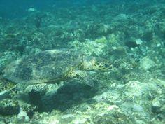 Natuurlijk ook genoeg schildpadden gezien!