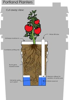 Graphic of sub-irrigated bucket planters. Portland Planters. -I actually don't use the lid on mine because I want to capture rain; mulch is always an option to avoid compaction and evaporation