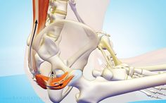 The Sacroiliac Joint: Anatomy and Function Sacroiliac Joint Dysfunction, Message Therapy, Si Joint Pain, Anatomy Images, Rheumatoid Arthritis Treatment, Yoga Anatomy, Yoga Teacher Training Course, Mental And Emotional Health, Sciatica