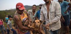 Por que cães se recusam a deixar o local da tragédia em Mariana?