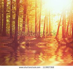 Sunrise in autumn forest with river