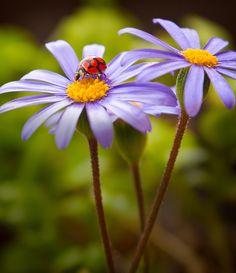 Lady Bug I