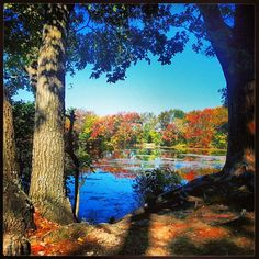 The #Fall foliage surrounding Beaver Pond in Franklin, Massachusetts
