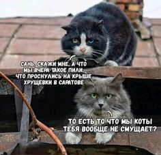 Produced by Buena Vista International and Touchstone Pictures, it features a screenplay by Tim Сайт знакомств Funny Shit, Funny Cats, Funny Animals, Funny Phrases, Funny Quotes, Funny Memes, Jokes, Funny Videos, Touchstone Pictures