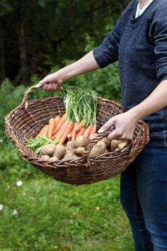 zanahorias y patatas frescas de tu huerto - no puede ser más verano ;) #estilonordico #estiloescandinavo